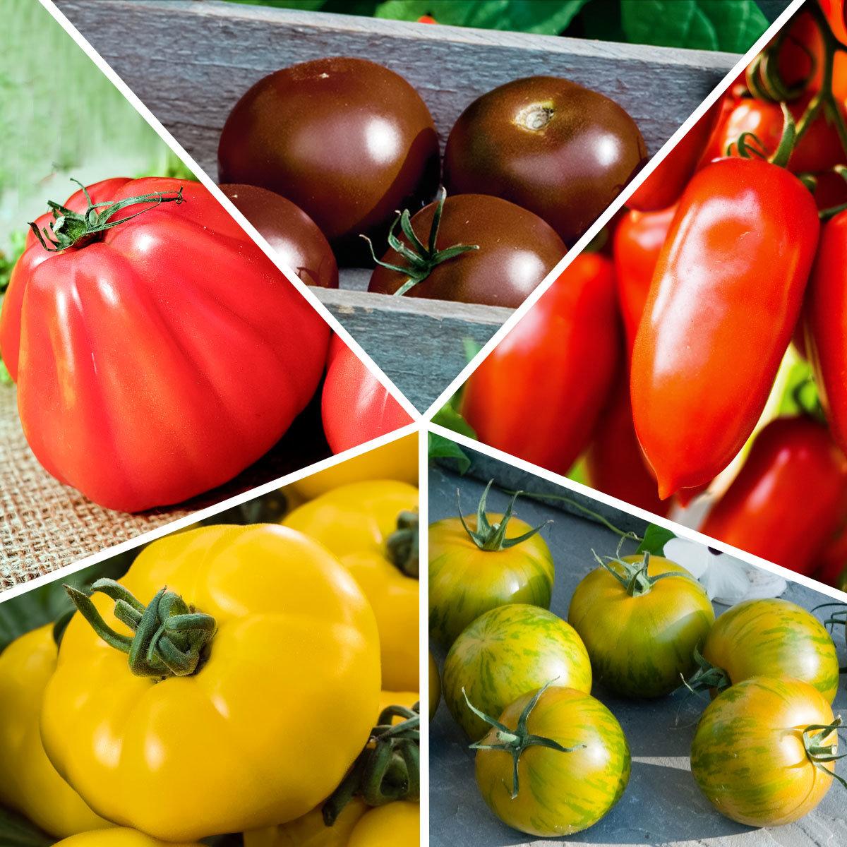 Sortiment Bunte Stab-Tomatenpflanzen, veredelt, 5 Stück