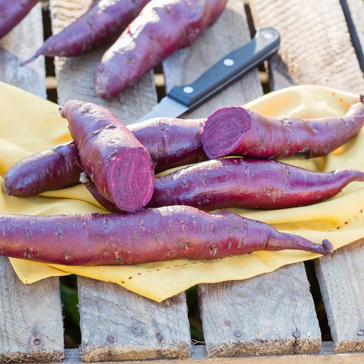Süßkartoffelpflanze Erato Violet, im ca. 13 cm-Topf