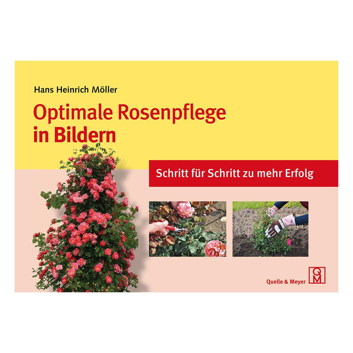 Optimale Rosenpflege in Bildern - Schritt für Schritt zu mehr Erfolg