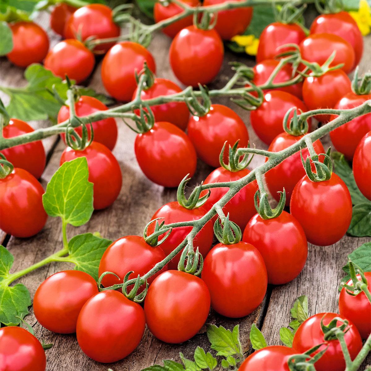 Tomatenpflanze Cocktailtomate, veredelt, im ca. 12 cm-Topf