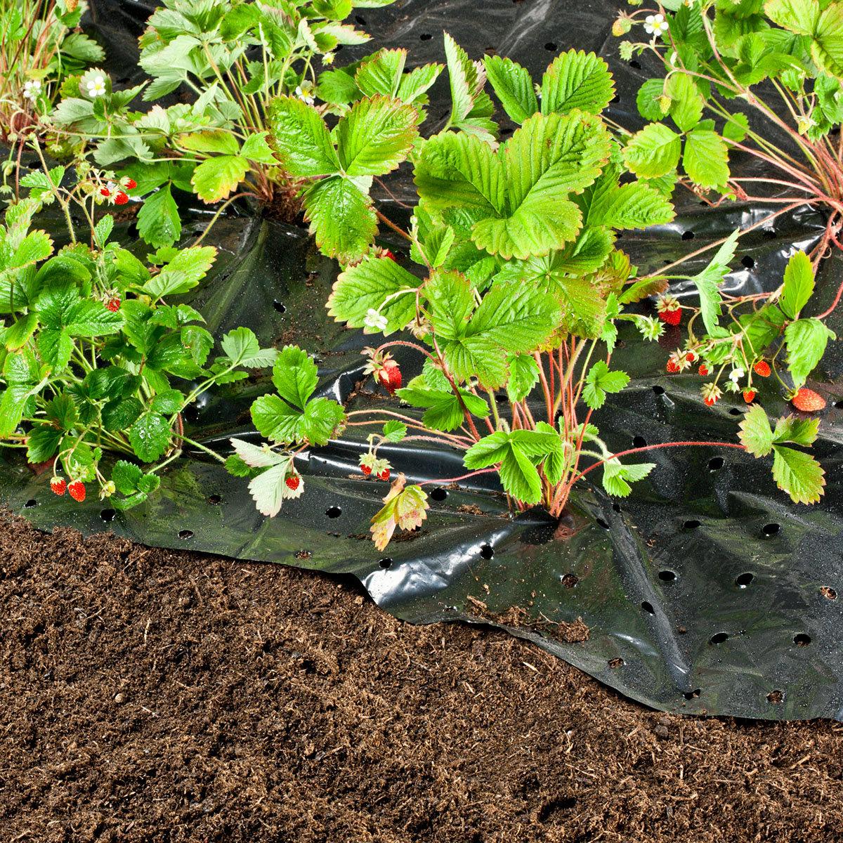 Unkraut- und Erdbeerfolie 10 x 1,5 m