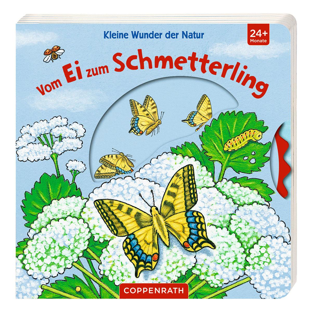 Kleine Wunder der Natur: Vom Ei zum Schmetterling