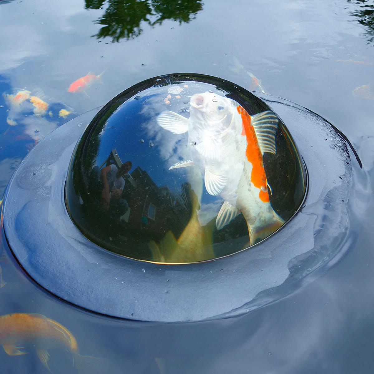 Fischkuppel für den Teich, 56 x 24 cm