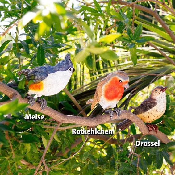 Meise, Drossel & Rotkehlchen, 3er-Set