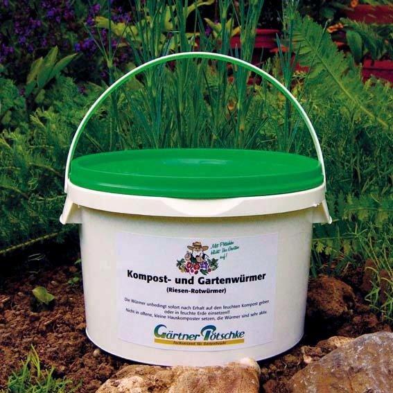 Kompostwürmer, Gartenwürmer, Regenwürmer, 250 g