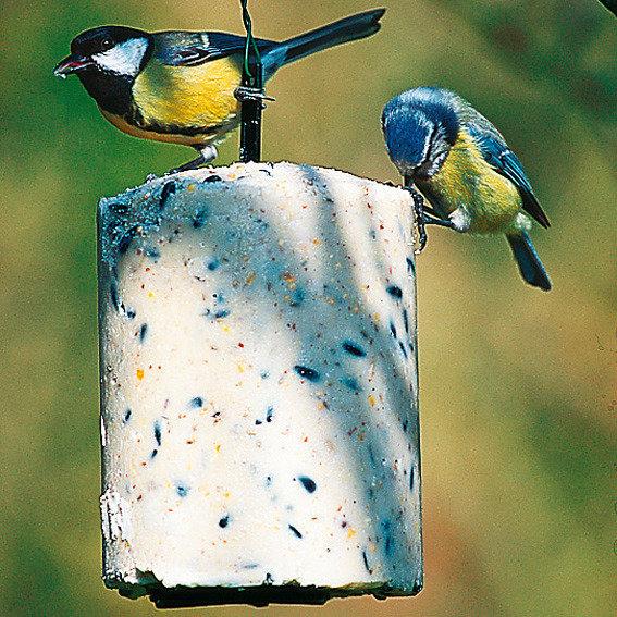 Energiekuchen mit insekten von g rtner p tschke for Gartentiere deko