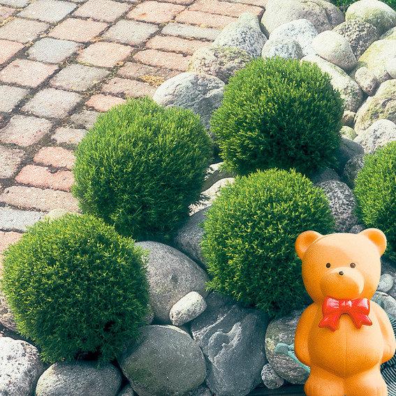 Streichellebensbaum Teddy
