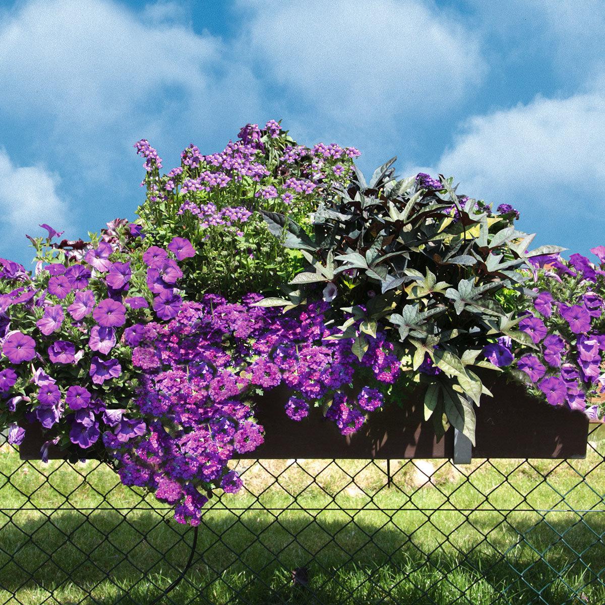 Sommerblumen-Sortiment Deep Purple