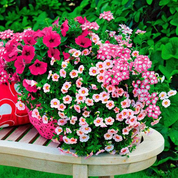 Trio-Fix Confetti Garden Hot Pink Jazz