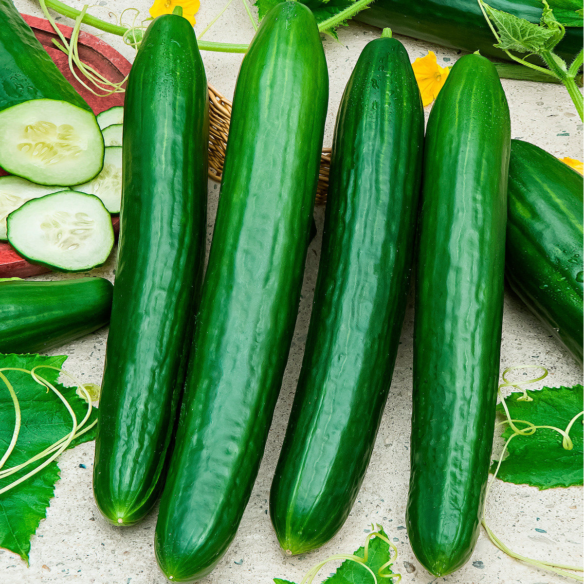 Gemüse-Pflanze Gurke Loustik F1 (veredelt)