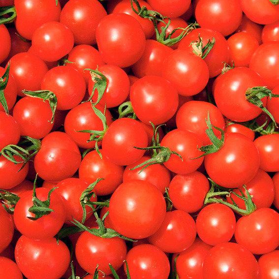 Tomatenpflanze Rubin Pearl F1, veredelt