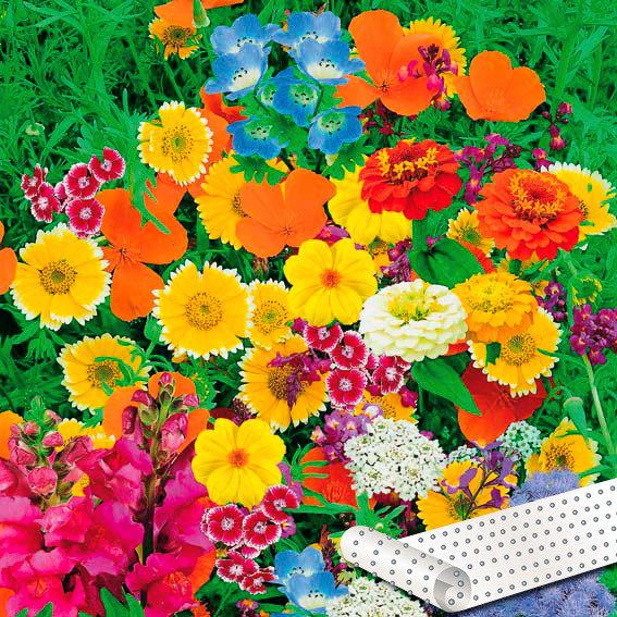 Blumen-Saatteppich 0,20 x 3 m, Zauberteppich