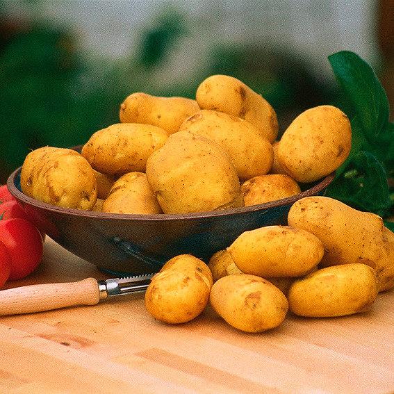 Kartoffel Sieglinde, 2,5 kg inkl. Vorkeimkiste