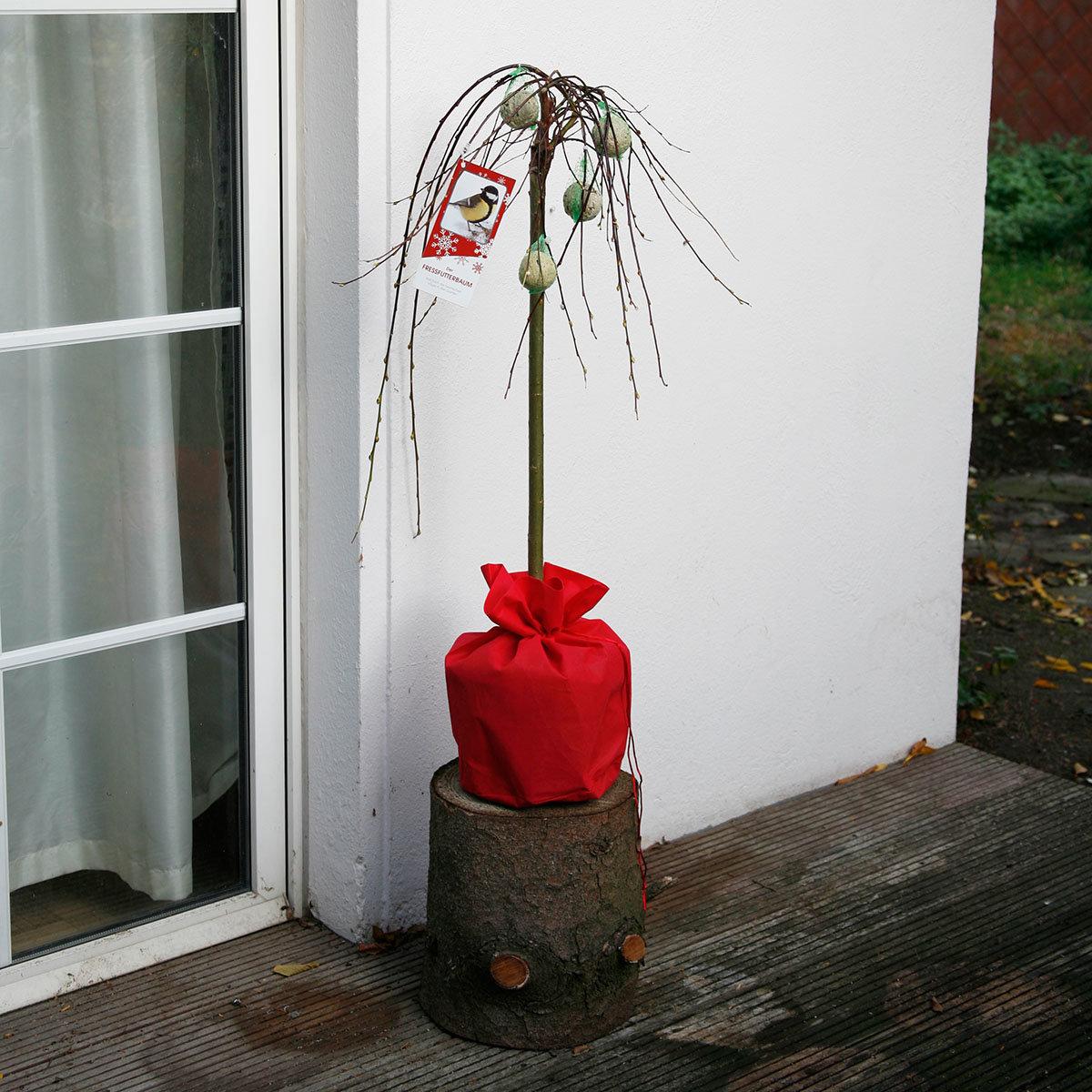Vogelfutterbaum, im ca. 23 cm-Topf | #12