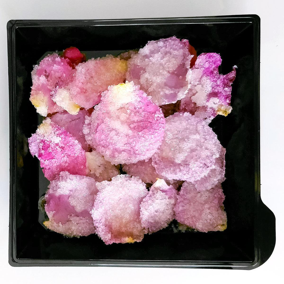 Essbare Culinaric Rose, rosa-apricot, im ca. 22 cm-Topf | #12