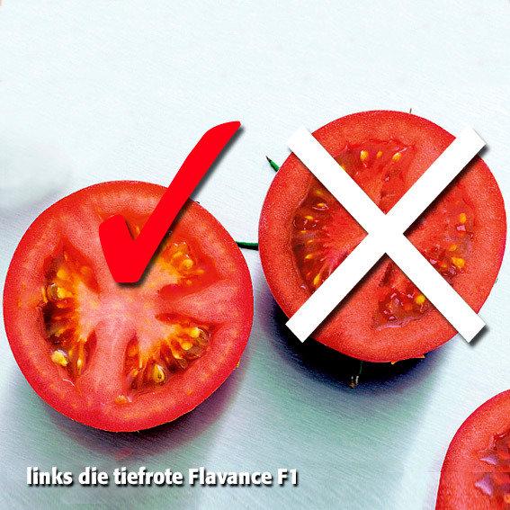 Tomatensamen Flavance F1 | #2