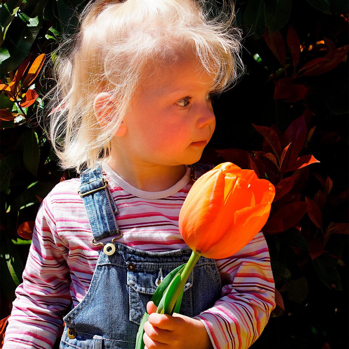 Tulpe Orange Balloon | #2