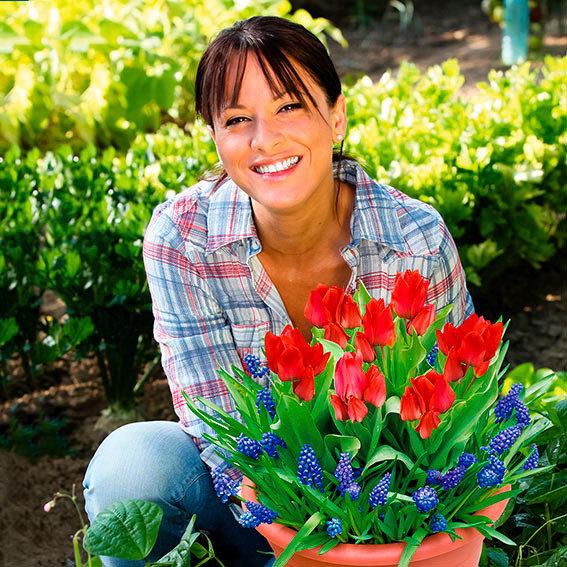 Pflanz-Tray Tulpen und Traubenhyazinthen | #2