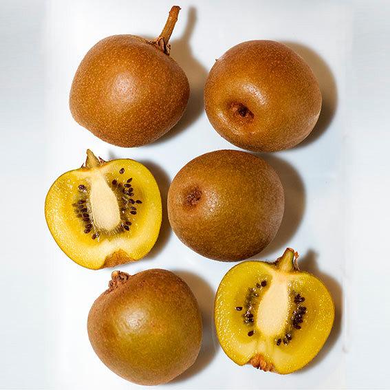 Kiwi Minkigold, männlich | #2