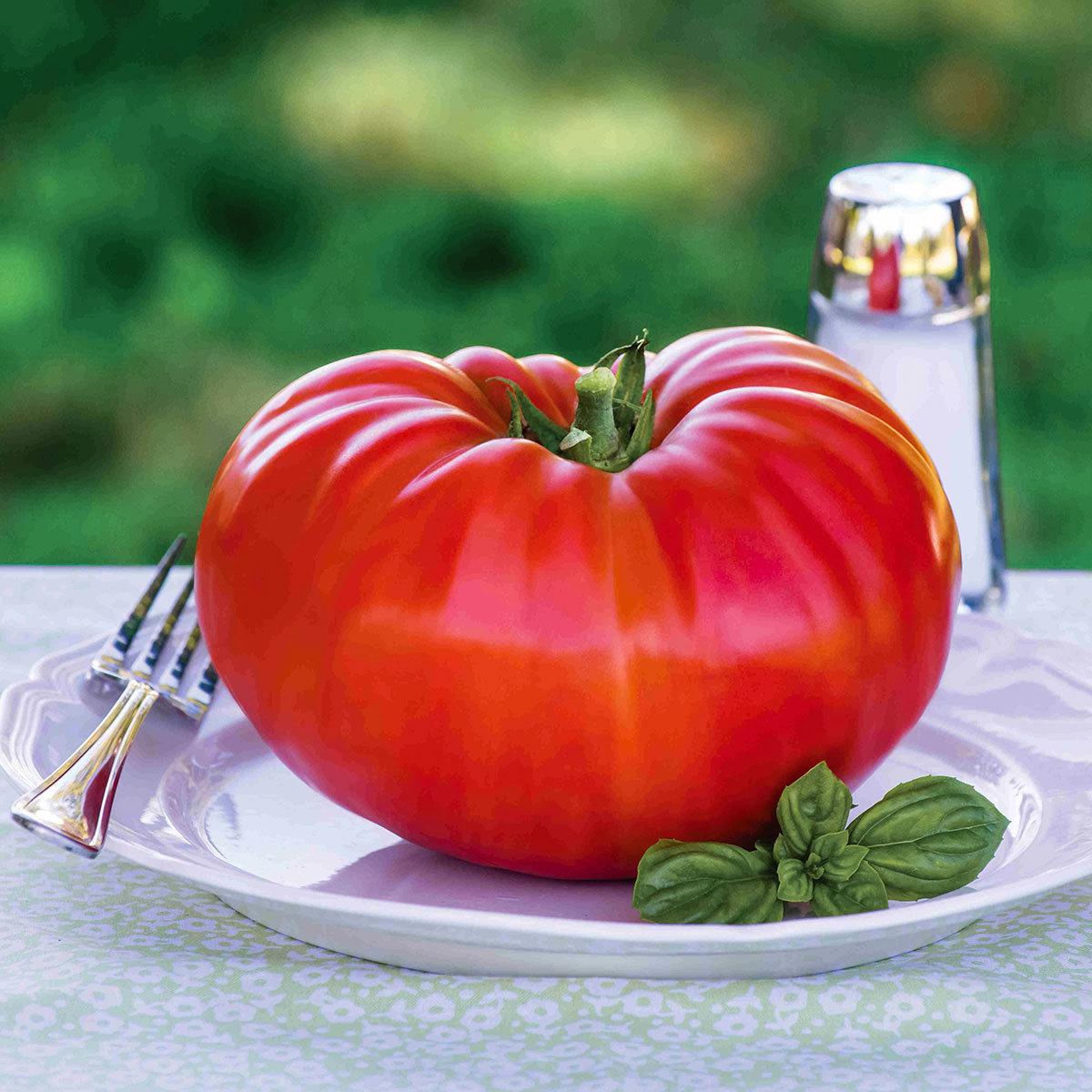 Tomatenpflanze Gigantomo F1, veredelt | #2