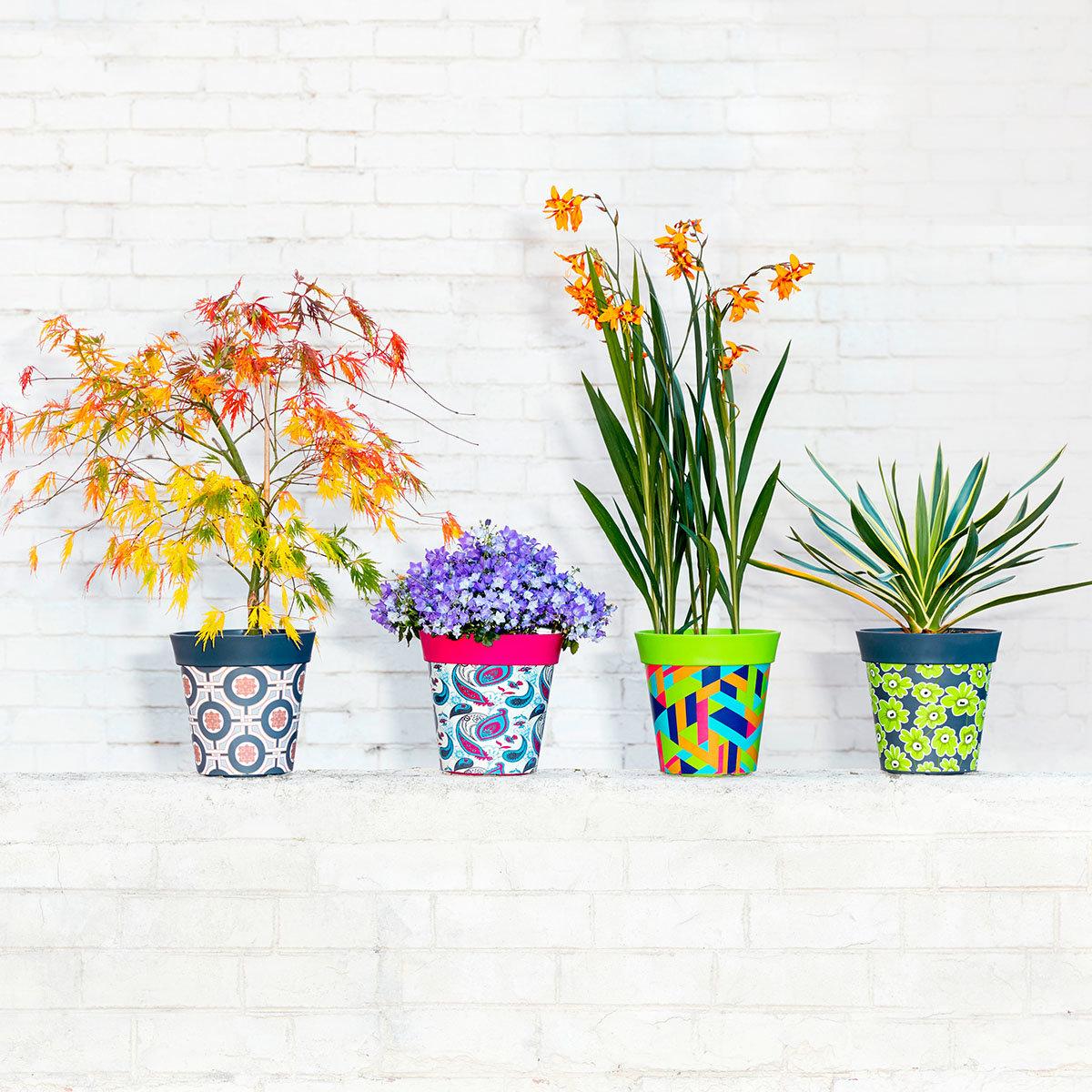 Blumentöpfe, Floral | #2