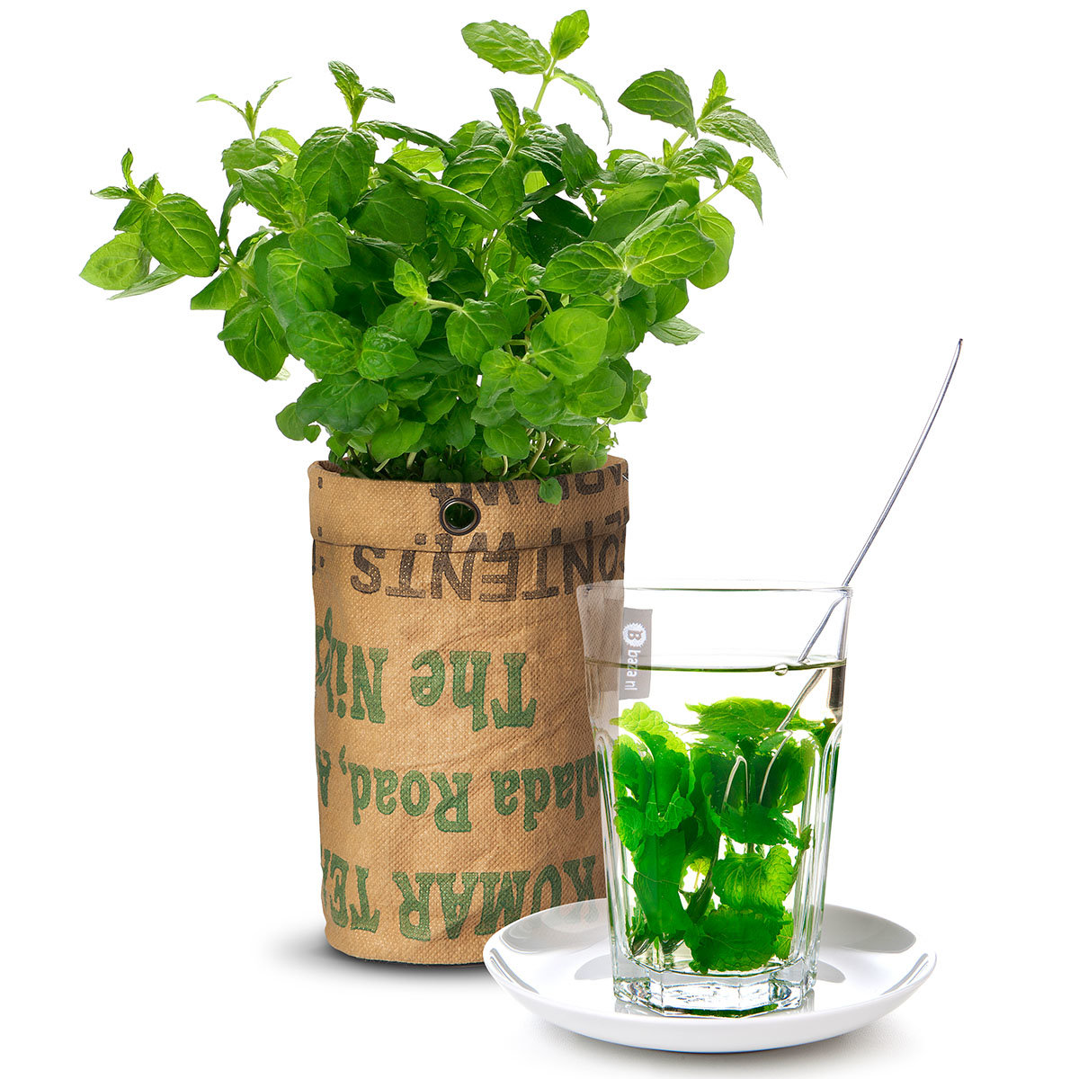 Teegarten Bio Minze im RAG Pflanzbeutel | #2