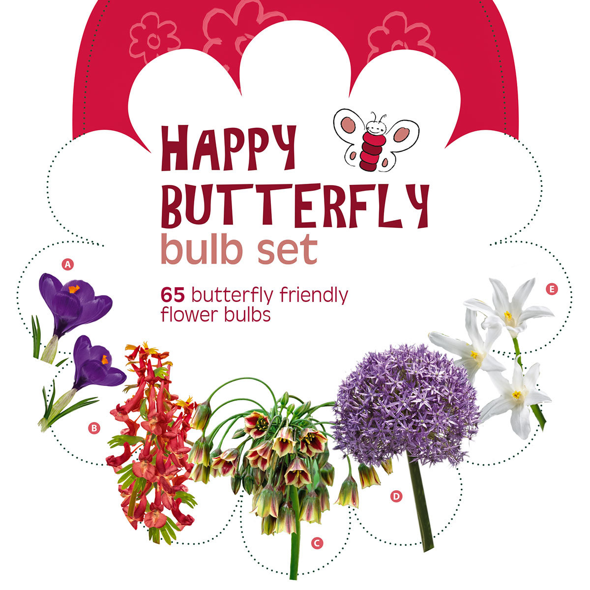 Blumenzwiebel-Set Happy Butterfly | #2