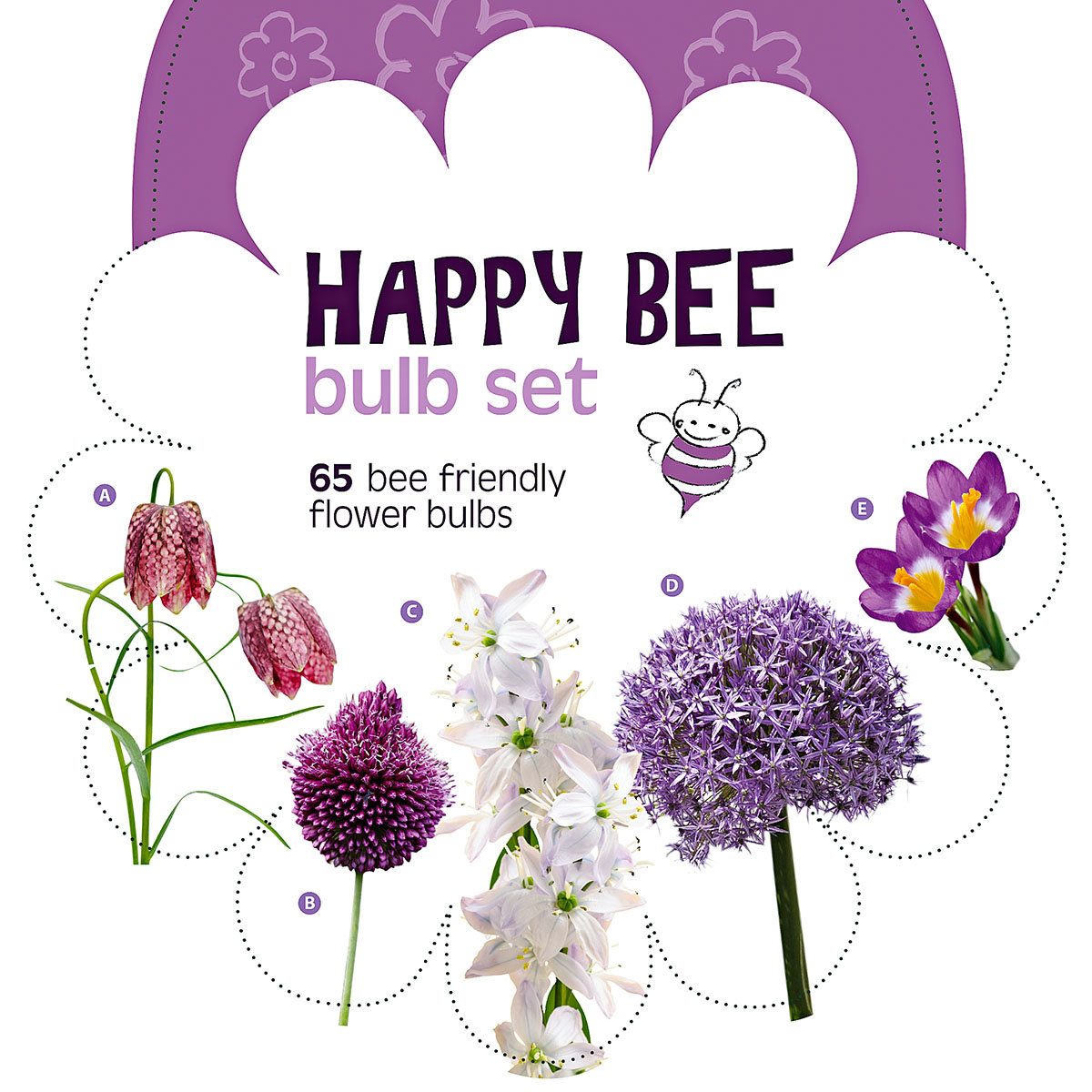 Blumenzwiebel-Sortiment Happy Bee Purpur-Violett | #2
