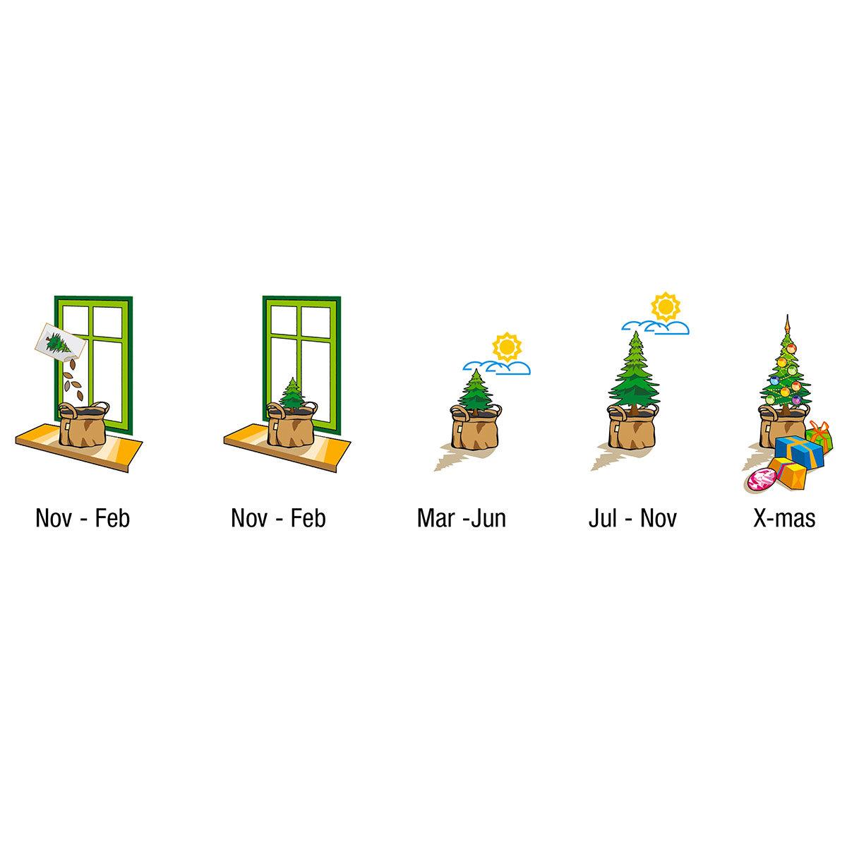 Weihnachtsbäumchen Saatgut im Jute-Anzuchtbeutel, inkl. 6 Liter Erde und Weihnachtskarte | #2