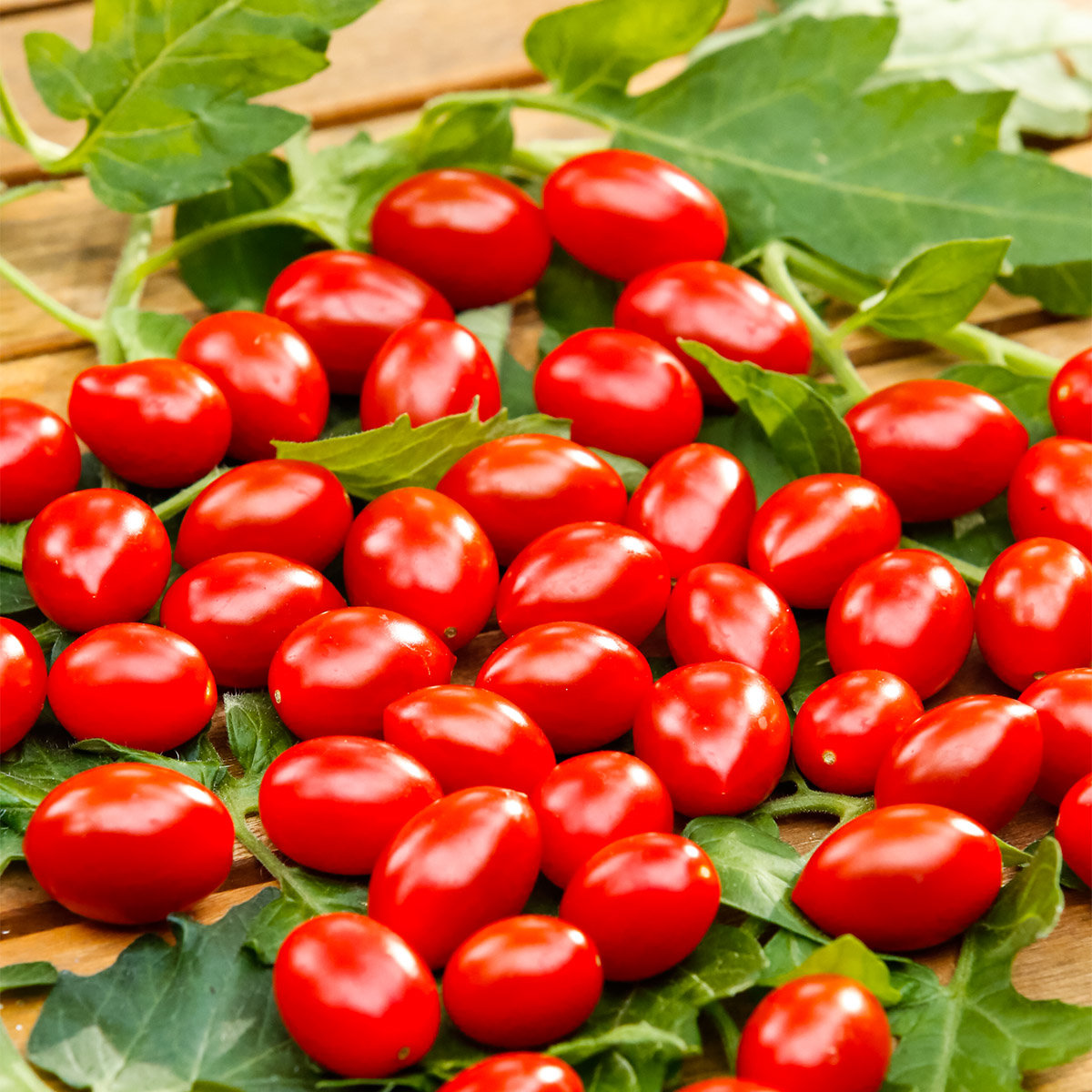 Tomatensamen Gärtner Pötschkes Mini Cherry F1 | #2