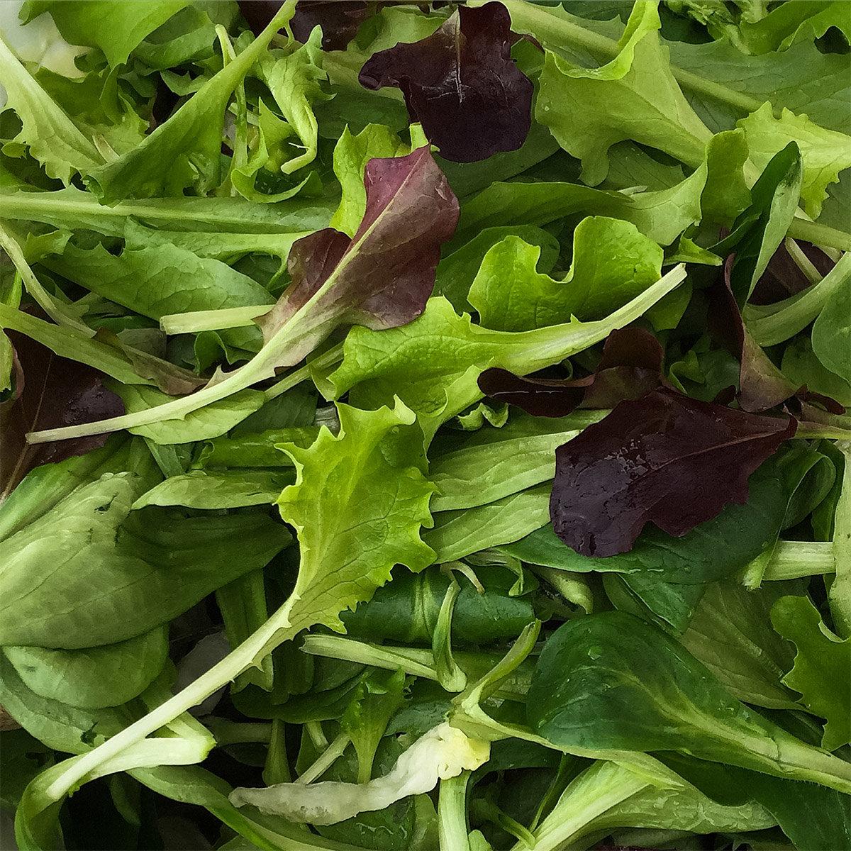 Saatplatten-Set Salatvielfalt, Hochbeet - und Balkonsalate | #2