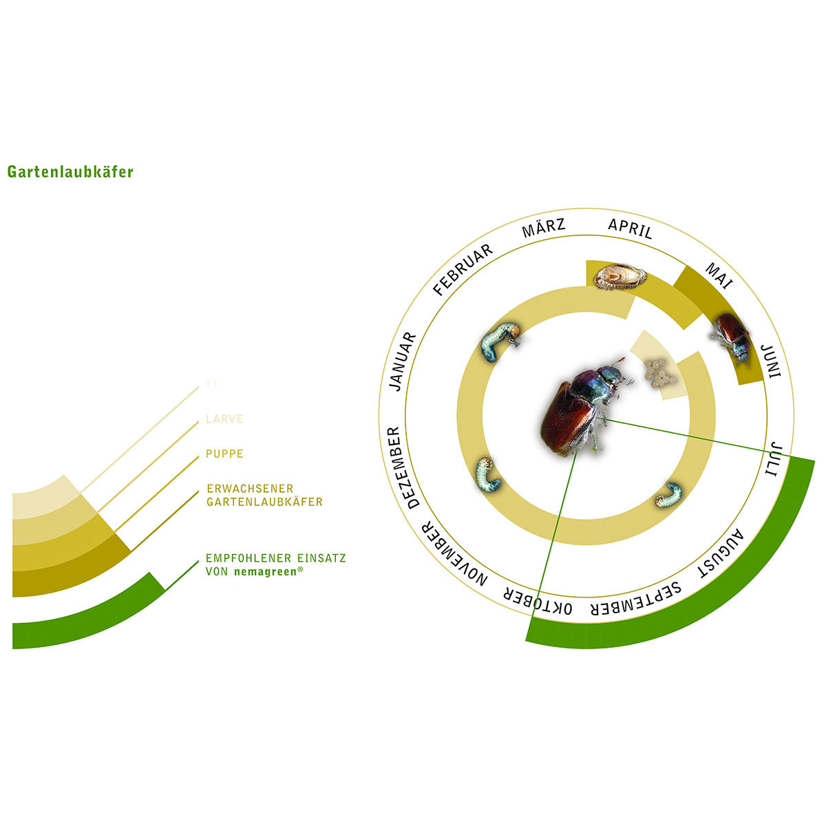 nema-green Nematoden gegen Rasenschädlinge, 50 Mio.   #2