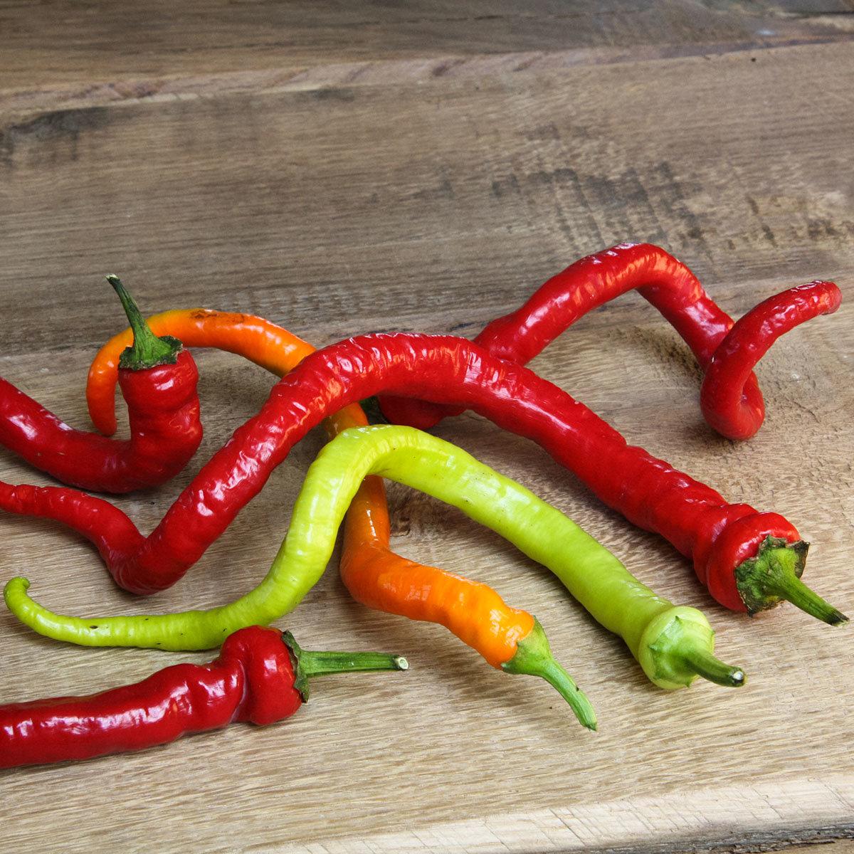 Paprikapflanze Milder Spiral Chili | #2