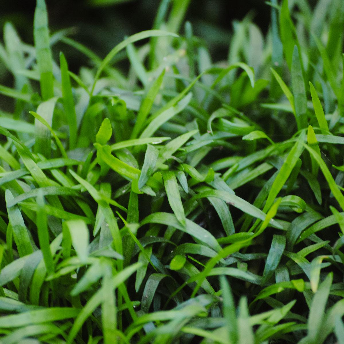 Miniteich Bunte Schale mit Wasserpflanzen | #2