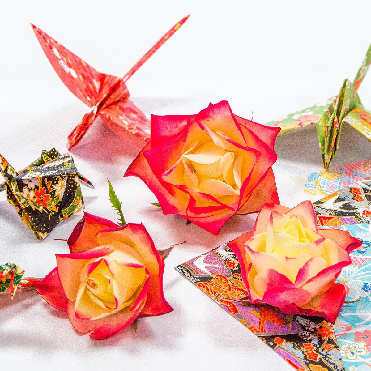 Beetrose Origami® | #2