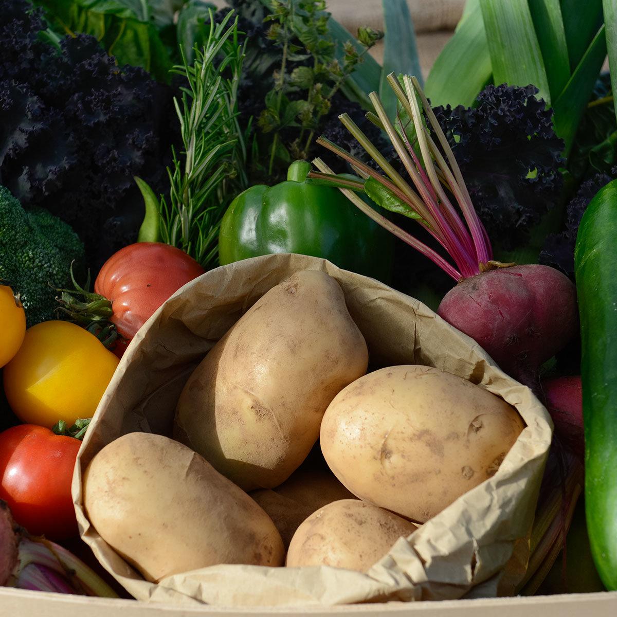 Kartoffelpflanze Sarpo Shona | #2