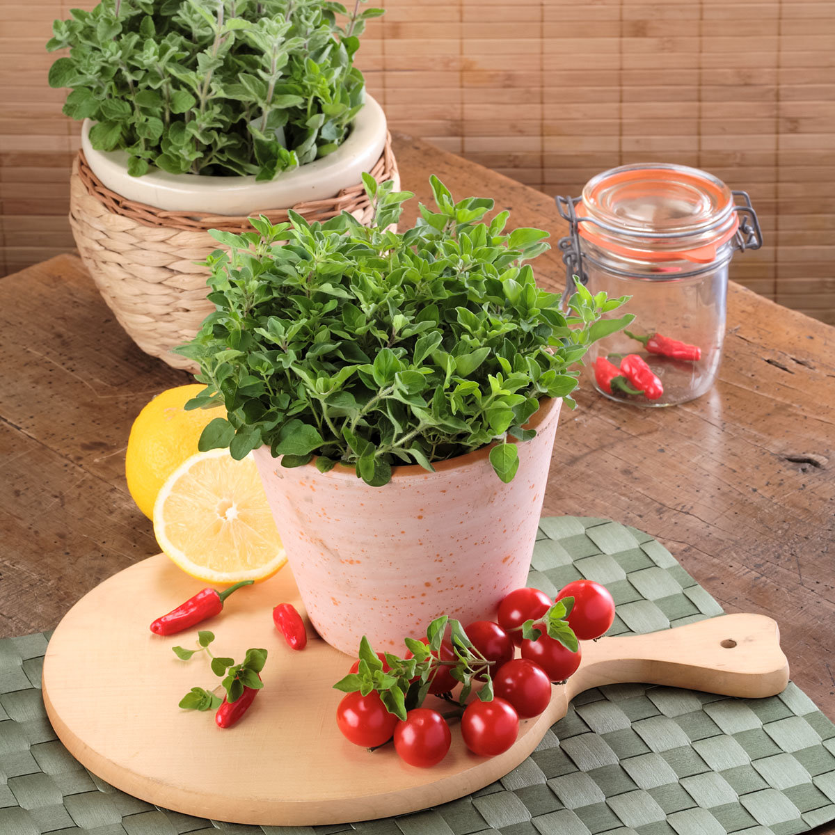 Küchenkräuterpflanze Oregano Kreta, im ca. 12 cm-Topf | #2