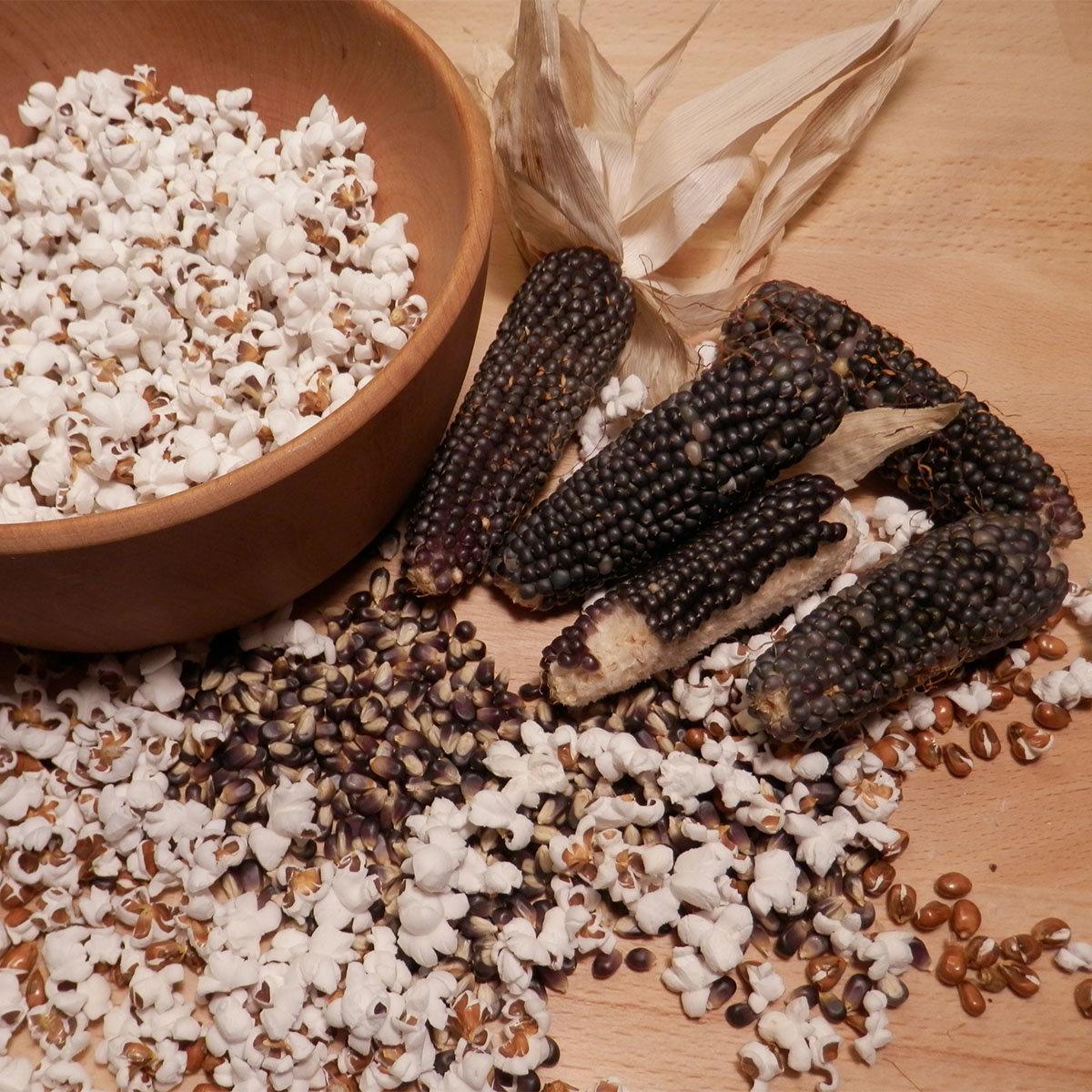 Maispflanze Schwarzer Popcorn-Mais   #2