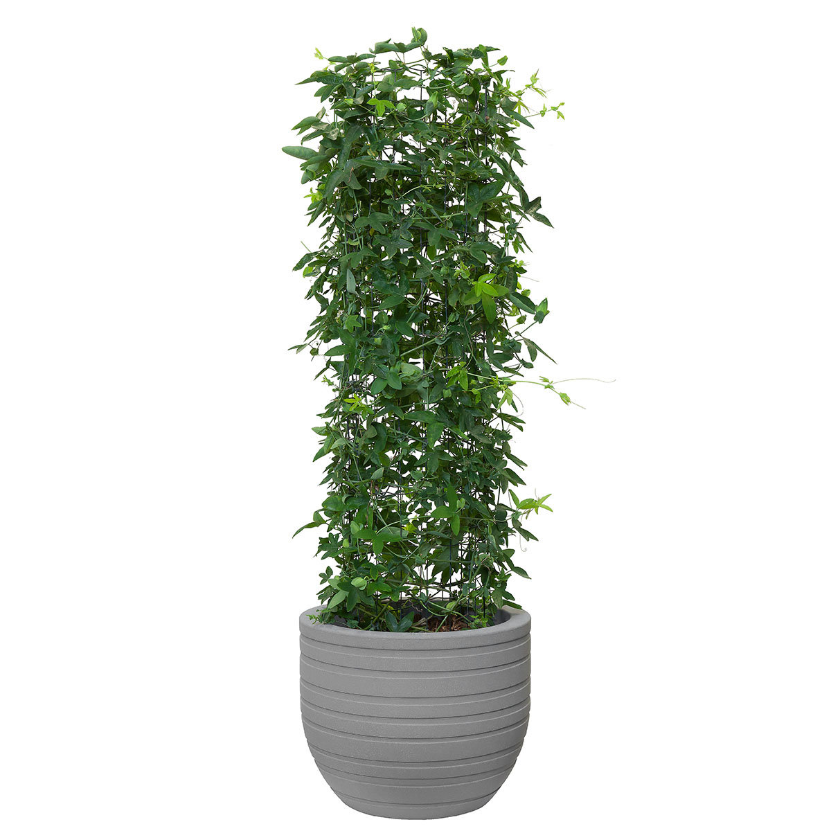 elho pflanzkübel ribbon, grau, 47cm online kaufen bei gärtner pötschke