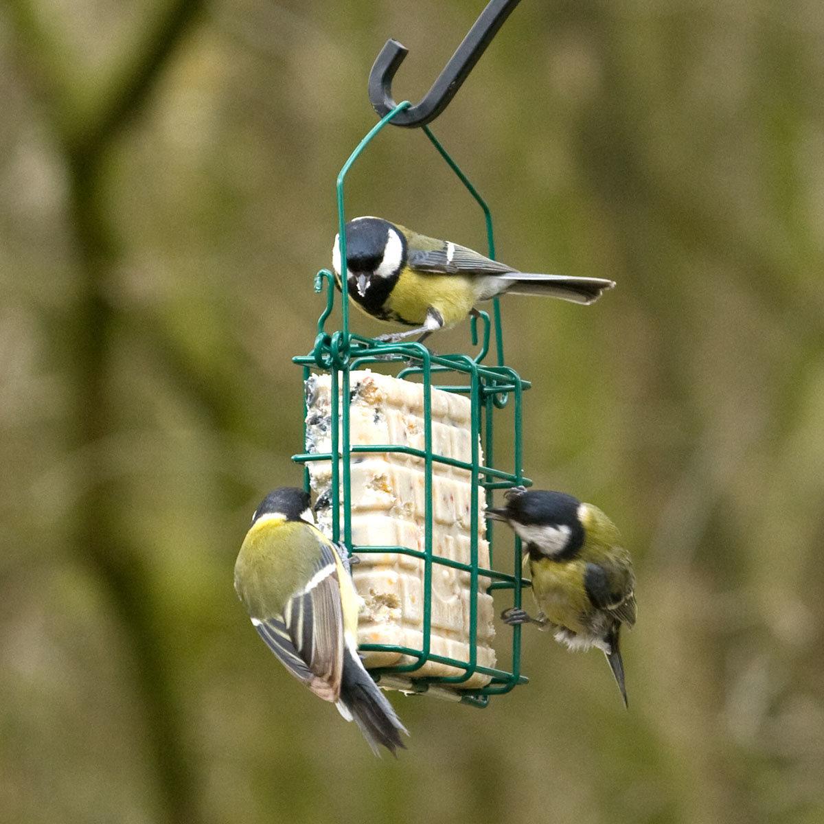 Vogelfutter-Starter-Set, 5-teillig | #2