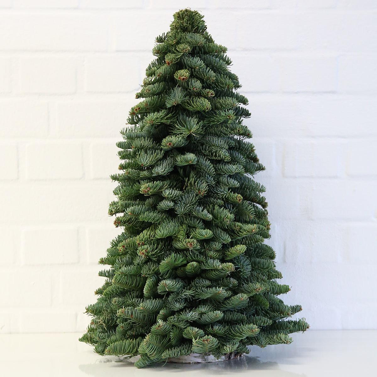 Nobilis-Weihnachtsbäumchen, groß | #2