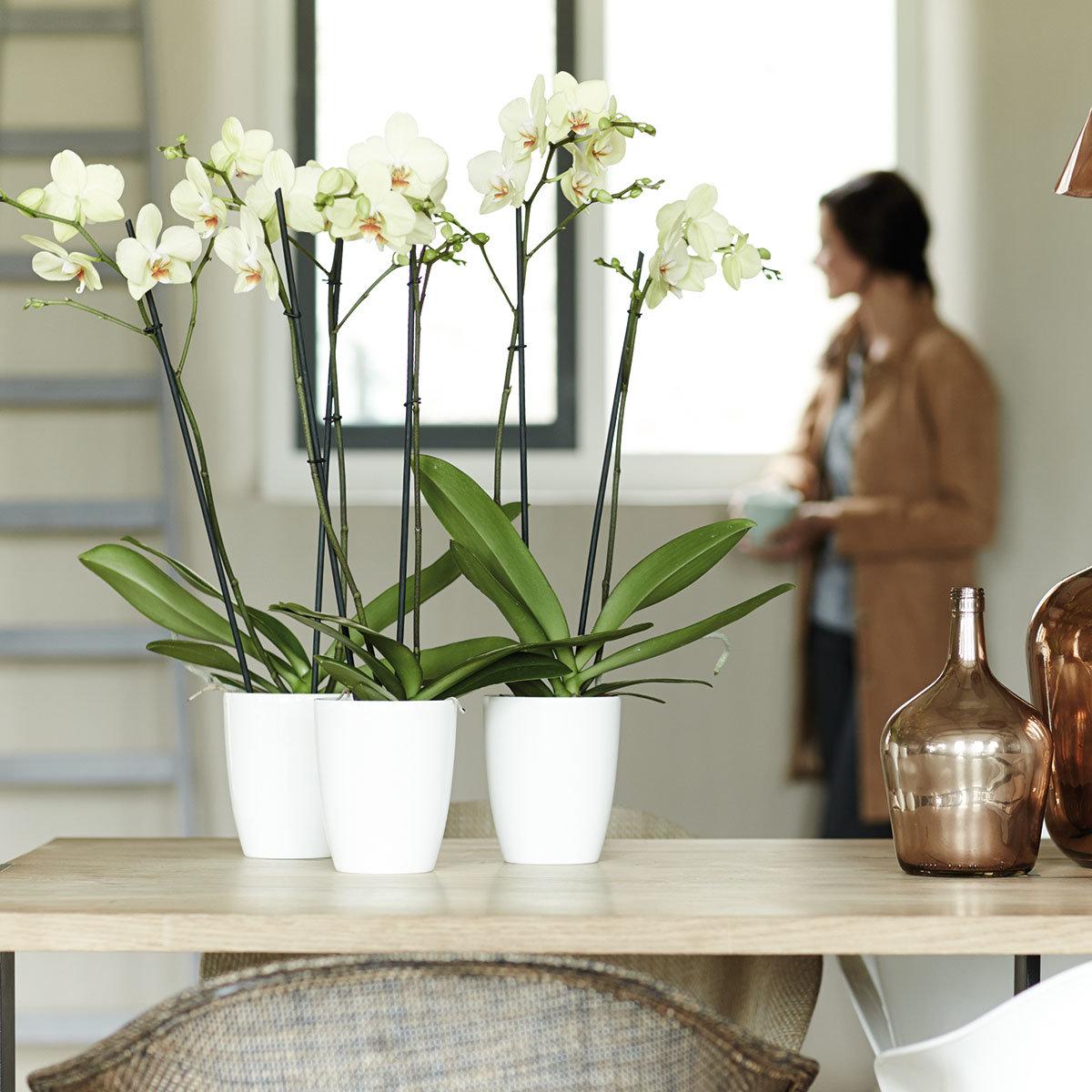 Orchideengefäß Brüssel, rund, 15,2x12,7x12,7 cm, weiß | #2