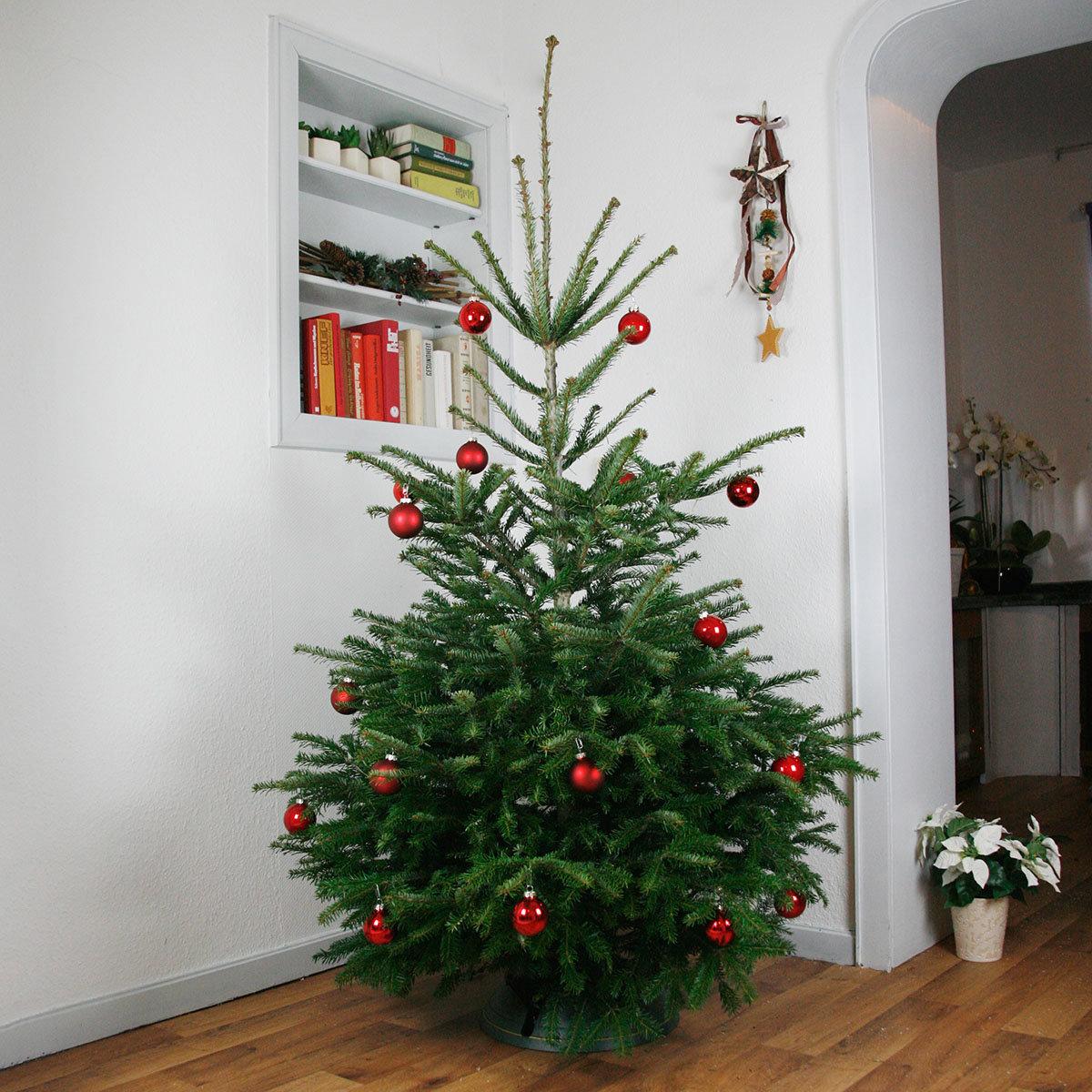 Premium Nordmanntanne 125-150 cm zum 1. Advent | #2