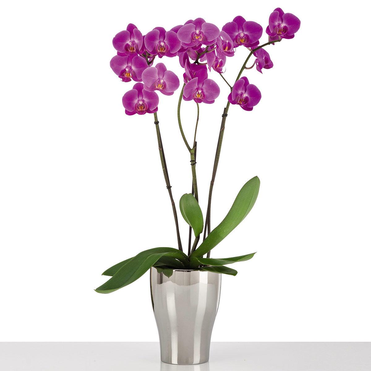 Scheurich Keramik-Orchideengefäß, silber | #2