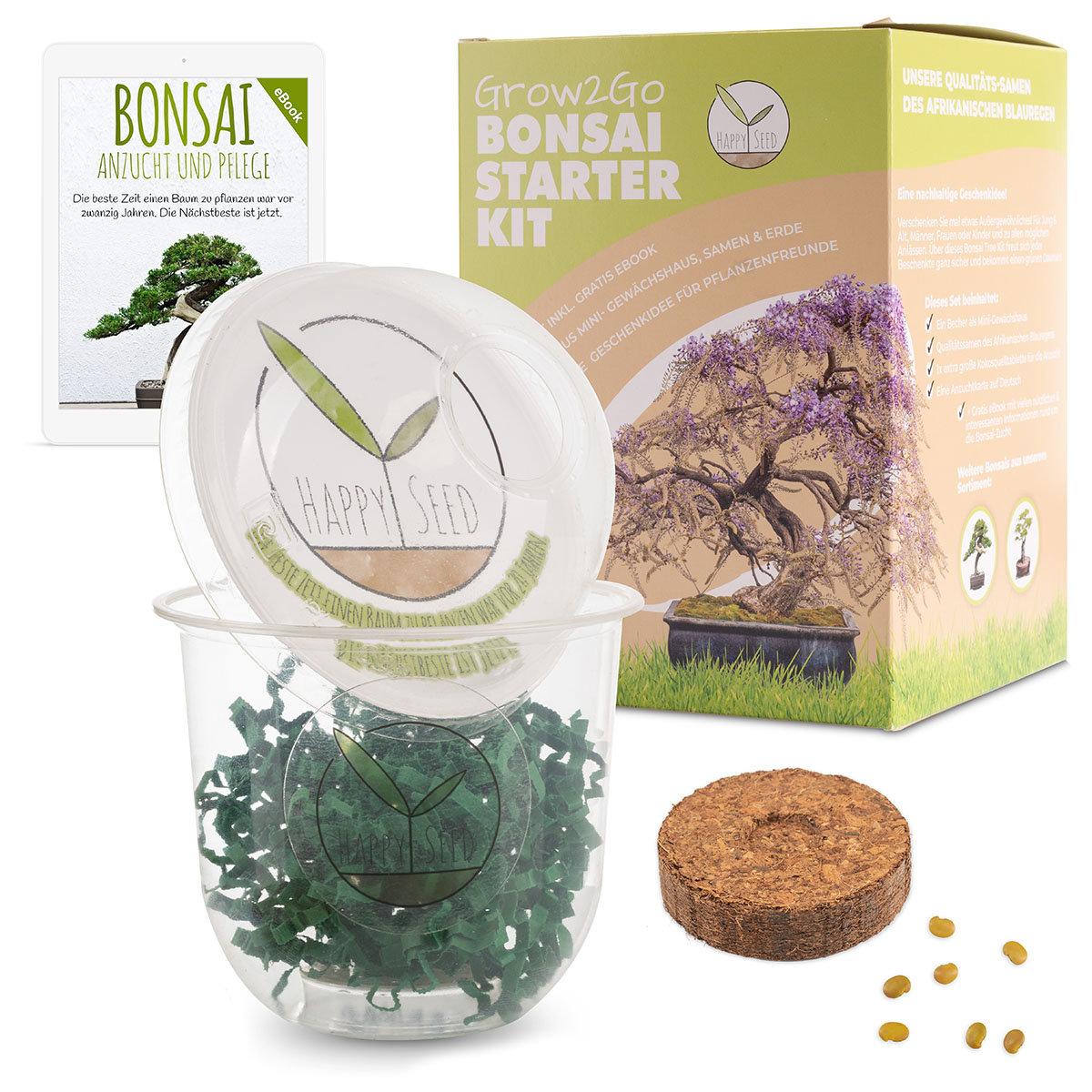Bonsai Starter Kit Afrikanischer Blauregen Grow2Go | #2
