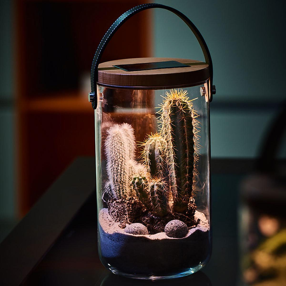 Deko Glas Long, 25,5 cm, Glas, Bambus, klar | #2