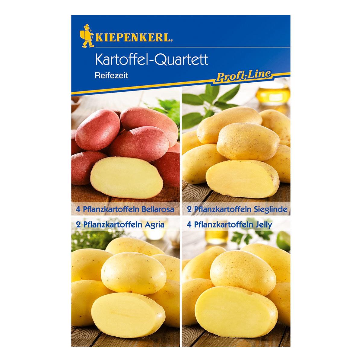 Kartoffel-Quartett Reifezeit-Spezialitäten, 12 Stück   #2