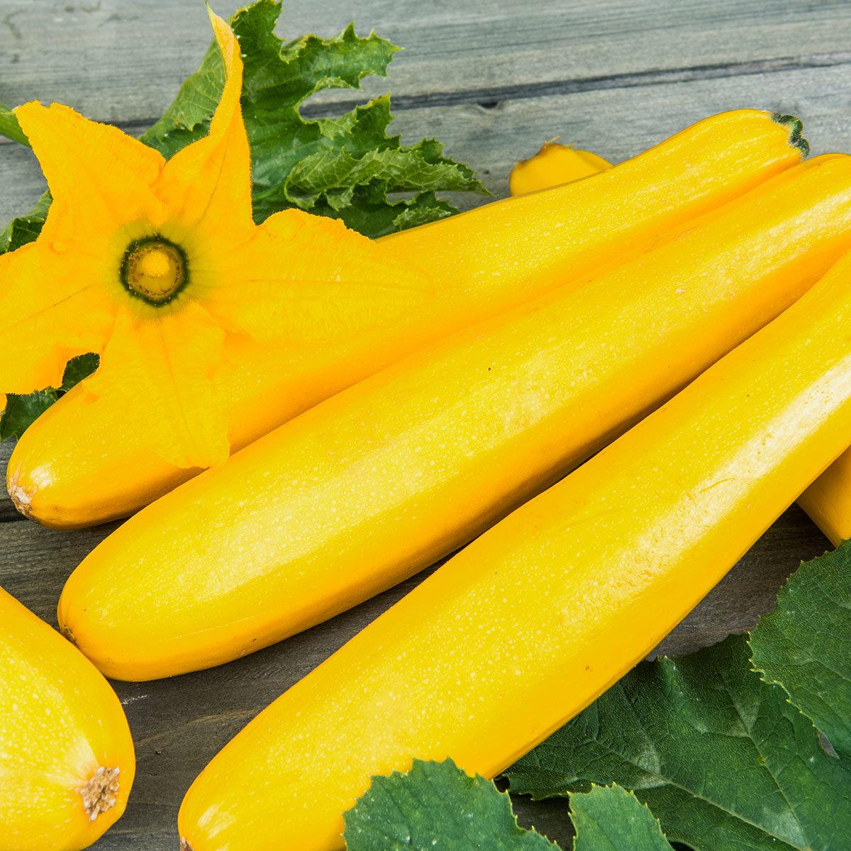 Zucchinipflanze Ola Gabriella, im ca. 11 cm-Topf | #2