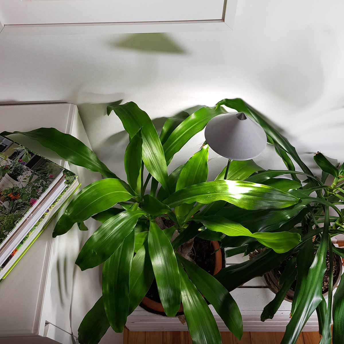Sunlite Pflanzenlampe, 7 W, 28-100 cm, Ø 11, Kabel 4 m,Aluminium, weiß | #2