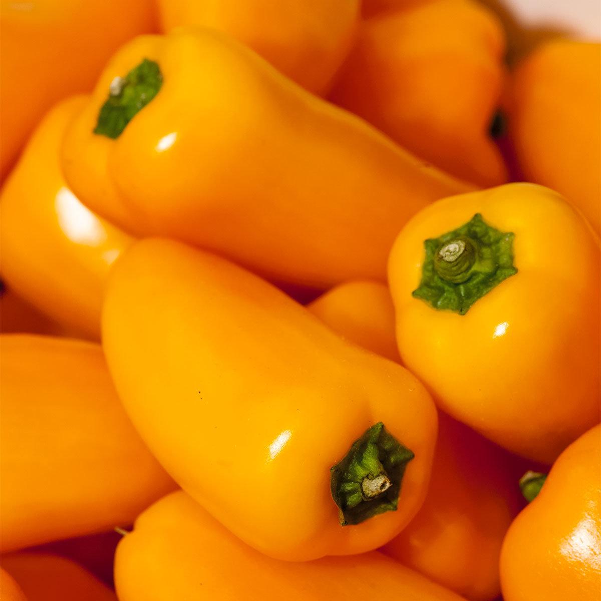 Paprikapflanze Snackpaprika Lubega Mini Yellow, veredelt, im ca. 11 cm-Topf | #2